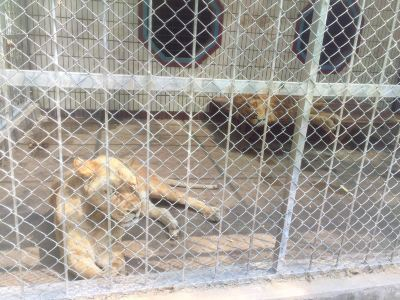 Xiliulaoshuan Zoo