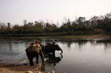 惊喜不断的骑大象之旅