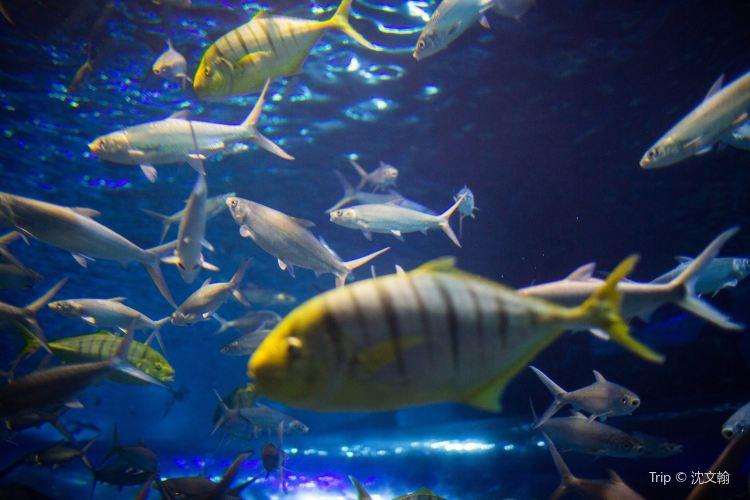 南京海底世界3
