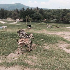 瓜达拉哈拉动物园旅游景点攻略图