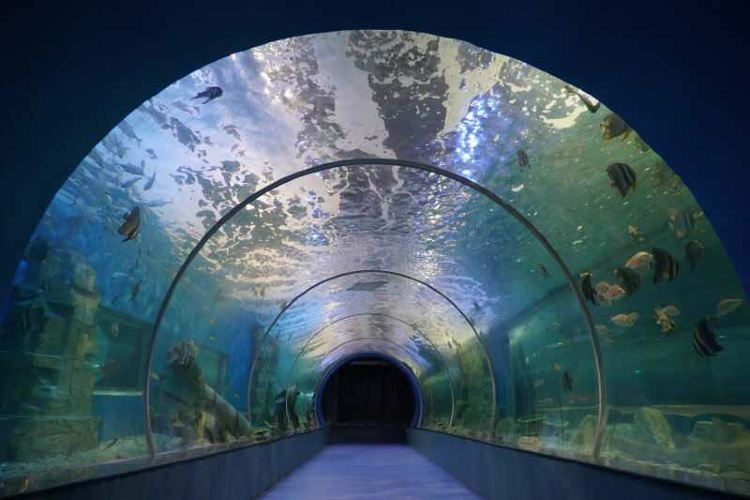 Oceanus Marine Park3
