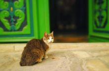 凯鲁万大清真寺的门&猫猫