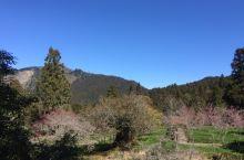 阿里山的美:从山脚到山顶,植被的茂盛,物种的丰富。