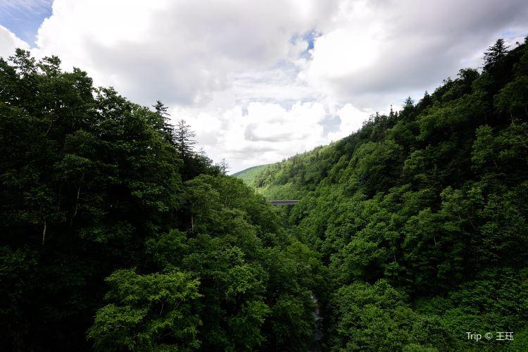 Shirahige Falls2
