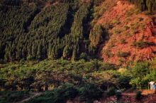 四川瀘州黃荊老林
