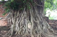 大城最有名的景点-被树根包住的佛头
