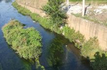 宣威河里的水草很有特色。