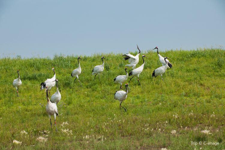 扎龍自然保護區1