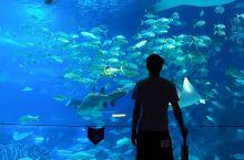 珠海长隆海洋王国,让我们一起去清爽一夏。
