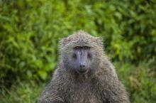 纳库鲁国家公园