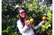 赏金色银杏,最美省道S244探秘之江西脐橙与美食