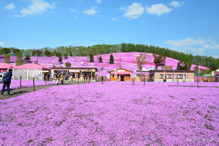 Shibazakura Park2