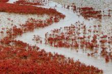 5月的红海滩