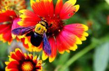 金秋十月,寻桂闻香,蜂蝶共舞,秋色撩人。