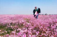 鄱阳湖蓼子花开