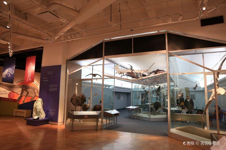 Royal Ontario Museum1