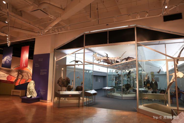 皇家安大略博物館1
