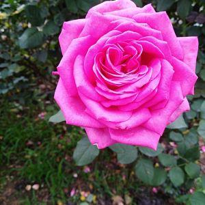 宝趣玫瑰世界旅游景点攻略图