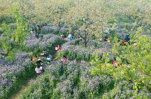国家4A景区,宿迁三台山国家森林公园