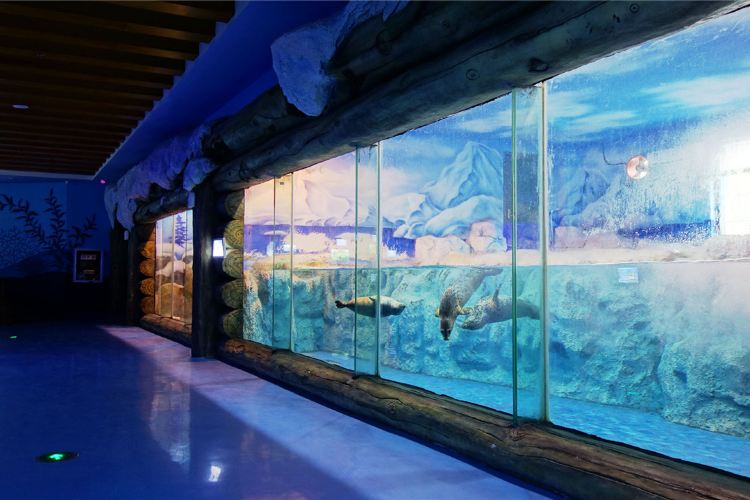 Qinhu Lake Ocean World2
