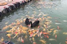 盱眙天鹅湖