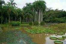 漫游中科院植物园一一西双版纳风情(2)