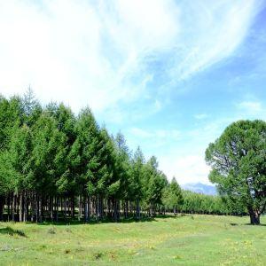 松树塘旅游景点攻略图