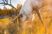 探秘原始驯鹿部落,带娃追寻草原深处的风光
