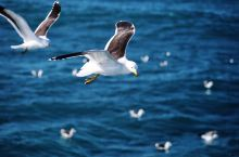 尼斯 蔚蓝海岸,真是法国的度假胜地
