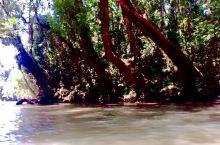(一)坐船穿过茂密的红树林,来到邦阿。一个原始、纯朴的小镇。在镇上的菜市逛了逛,买了点东西,到淡布伦