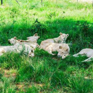 狮子园旅游景点攻略图
