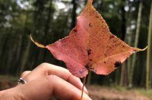觅彩林知深秋