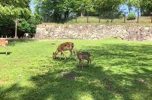奈良公园和小鹿们亲密接触!