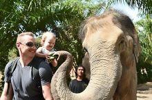 普吉岛大象保护营-泰国网红-萧泰后陪你和大象玩耍