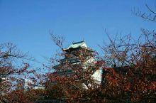 #金秋红叶#咱们俩的旅行--大阪天守阁