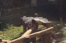 沈阳棋盘山动物园