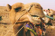 骑骆驼,睡沙漠