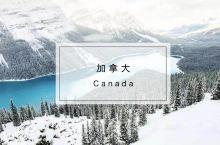 芝麻信用分也能办加拿大签证啦!这里北极熊比人还多,冬季活动秒杀北海道