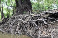 """亚马逊雨林——""""地球之肺"""""""