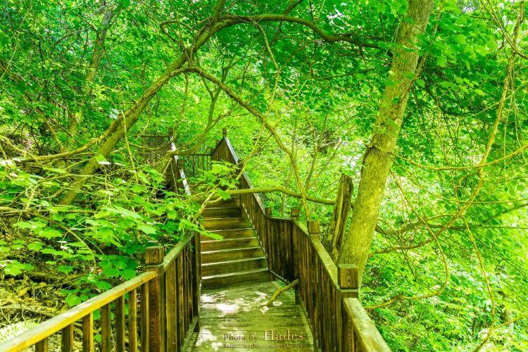 Tiannvshan Forest Park4