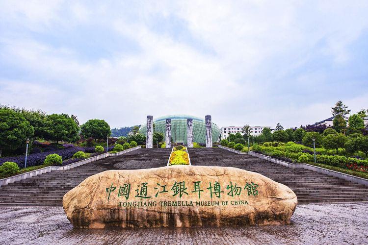 通江銀耳博物館1