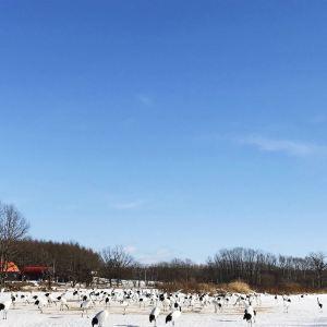 阿寒国际丹顶鹤中心旅游景点攻略图
