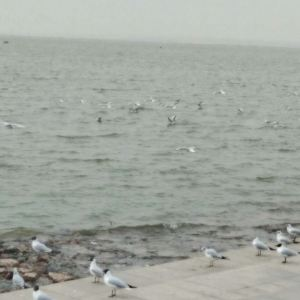 乌海湖生态旅游区旅游景点攻略图