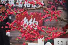水墨桃花,乡约翁源| 赏花之余还能体验诗书画文化艺术之旅