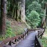 巨木群栈道旅游景点攻略图