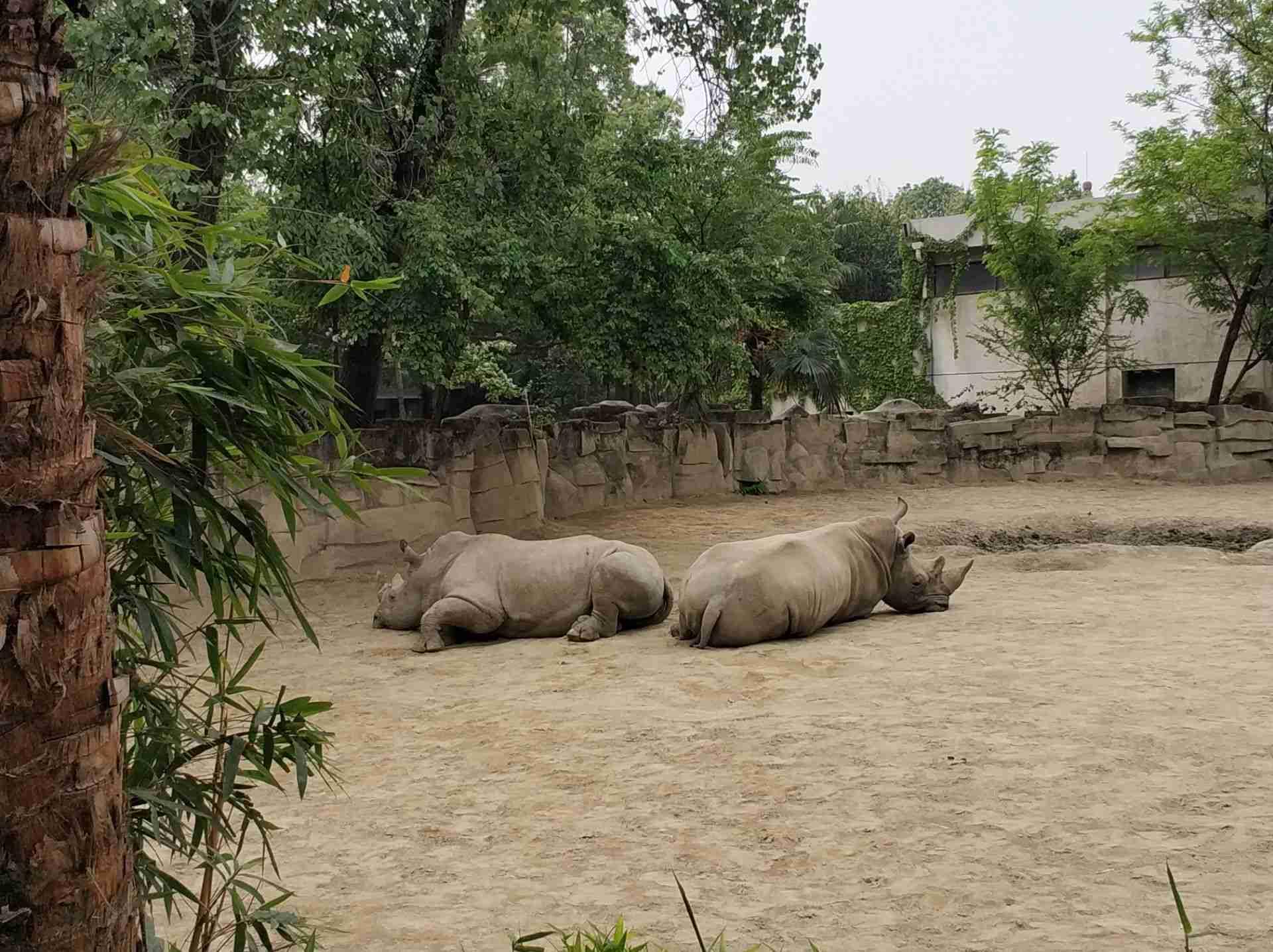 成都动物园附近招聘_【携程攻略】成都成都动物园景点,哈哈哈,26岁的人第一次去动物园
