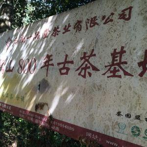 南糯山旅游景点攻略图