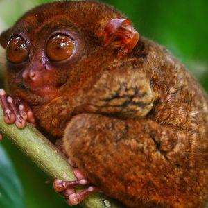 眼镜猴游客中心旅游景点攻略图