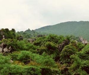 安源森林公园旅游景点攻略图