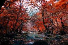 一个未开发的小众红叶观赏地 在辽宁鞍山的小县 很多摄影师去打卡